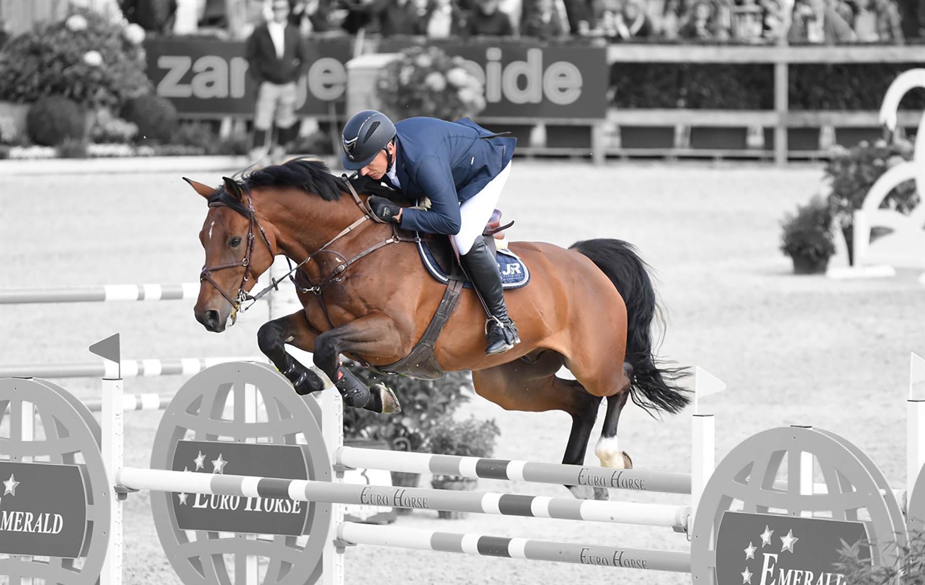Jr Sporthorses Great Jumping Horses For Sale